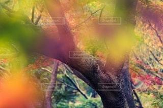 紅葉した木々の写真・画像素材[2667499]