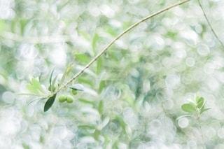 秋の写真・画像素材[2668292]