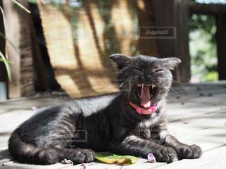 猫,動物,屋外,ペット,人物,あくび,黒猫,クロネコ,ネコ