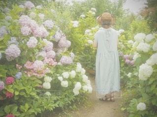あじさいと女の子の写真・画像素材[3380801]