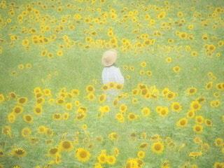 ひまわり畑の女の子の写真・画像素材[3494883]