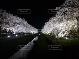 花,桜,夜,暗い,水面,夜桜