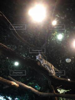 猫,動物,木,歩く,ライト,見上げる,樹木,ペット,人物,木の上,猫カフェ,野生,ネコ