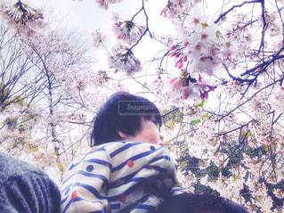 子ども,家族,2人,自然,風景,花,春,桜,木,屋外,花見,満開,見上げる,樹木,お花見,人,イベント,肩車,赤ちゃん,レジャー,お出かけ,体験,肩ぐるま,かたぐるま,ブロッサム,麗らか