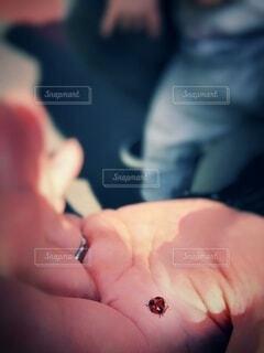 男性,手,指,手のひら,手持ち,人物,人,ポートレート,てんとう虫,デート,発見,優しさ,ライフスタイル,小さな幸せ,手元,掌,夫,彼