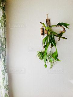 壁掛けの植物の写真・画像素材[2725303]