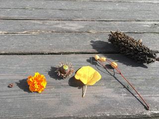 テーブルの上の秋の写真・画像素材[2733346]