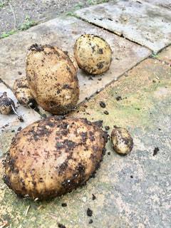 とれたて新鮮ジャガイモの写真・画像素材[2825278]