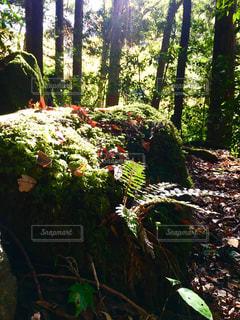 森の中の太陽の光の写真・画像素材[2859610]