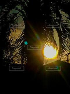 空,夕日,太陽,南国,シルエット,光,樹木,ヤシの木,明るい