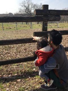 牧場の牛を見る親子の写真・画像素材[2941443]