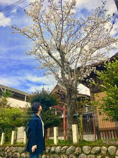 女性,風景,空,桜,屋外,神社,樹木,人,立つ,さくら