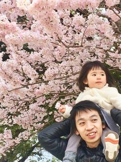 男性,家族,風景,花,桜,屋外,親子,少女,満開,人,赤ちゃん,幼児,さくら,ブロッサム