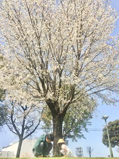 男性,子ども,家族,2人,空,花,桜,屋外,親子,仲良し,樹木,しゃがむ,日中,さくら,ブロッサム