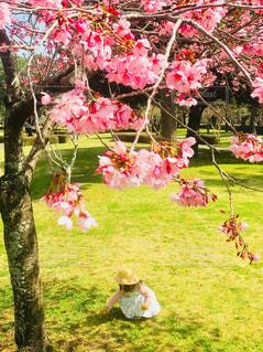 子ども,1人,花,桜,屋外,ピンク,女の子,草,樹木,メルヘン,桜の花,さくら,ブロッサム