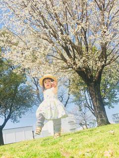 子ども,1人,風景,公園,春,桜,屋外,樹木,ピクニック,人,笑顔,幼児,お出かけ,桜の花,さくら