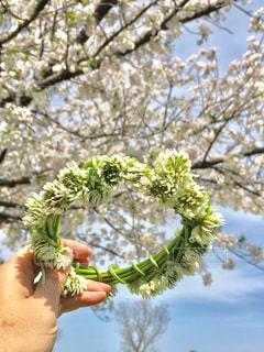 空,花,春,桜,屋外,手,満開,樹木,人,クローバー,シロツメクサ,冠,さくら,ブロッサム