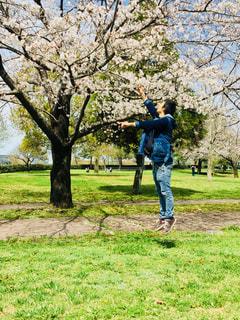 男性,風景,公園,花,春,桜,木,屋外,ジャンプ,草,樹木,人,さくら