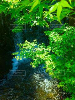 滝ともみじの新緑の写真・画像素材[3140482]