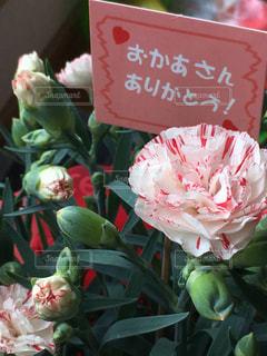 花のクローズアップの写真・画像素材[3192200]