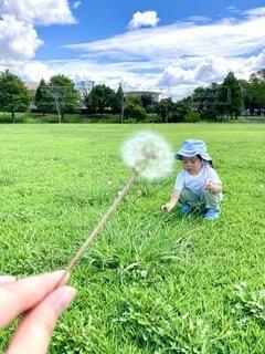 風景,空,公園,芝生,屋外,雲,手,景色,草,手持ち,遊ぶ,人物,人,広場,たんぽぽ,ポートレート,綿毛,遊び場,ライフスタイル,草木,手元