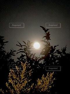 十五夜の月の写真・画像素材[3736805]
