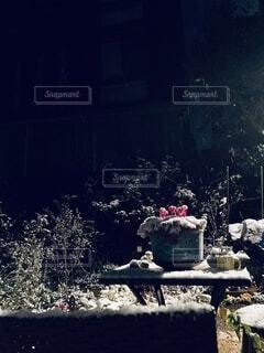 庭に積もる雪の写真・画像素材[4137326]