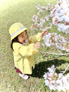 桜と幼稚園の服を着た女の子の写真・画像素材[4318291]