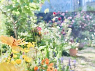 花園のクローズアップの写真・画像素材[4334879]