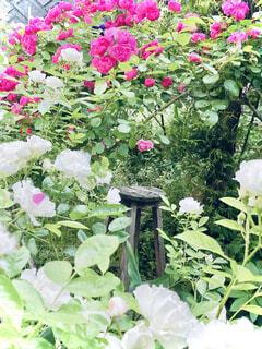 花園のクローズアップの写真・画像素材[4367371]