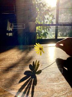 花と影の写真・画像素材[4416220]