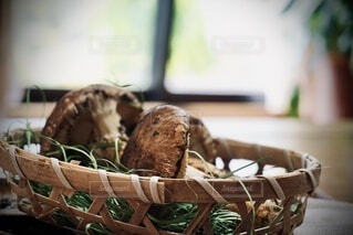 松茸のクローズアップの写真・画像素材[4831571]
