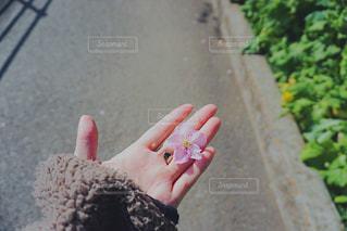 女性,春,桜,木,手,花見,指,お花見,人,イベント,爪,草木,さくら,物