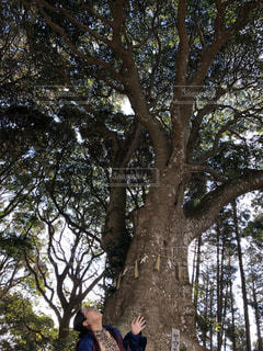 木の隣に立っている人の写真・画像素材[2923370]