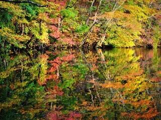 長老湖の湖面に映る美しい紅葉の写真・画像素材[3737298]