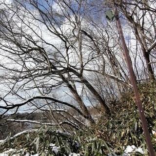 ほんのり雪景色の写真・画像素材[4141309]