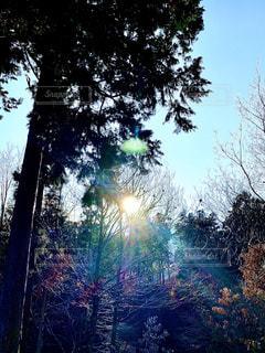 自然,空,森林,太陽,光,樹木,草木