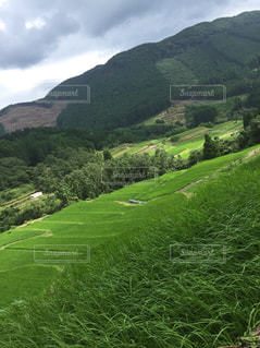 緑豊かな緑の丘の中腹で放牧の羊の群れの写真・画像素材[1414272]