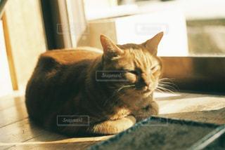 窓の前に座っている猫の写真・画像素材[2702421]