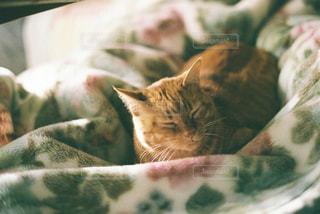 眠っている猫の写真・画像素材[2702440]