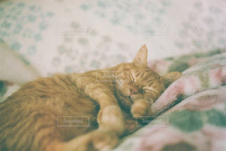 ベッドに横たわっている猫の写真・画像素材[2702453]