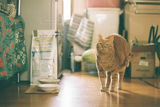 部屋に立っている猫の写真・画像素材[2735649]