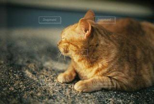 猫の写真・画像素材[3372121]