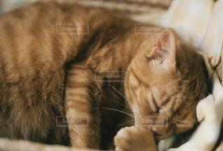 ベッドで寝ている猫の写真・画像素材[3372119]