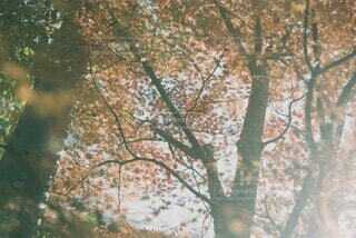 紅葉とフィルムの写真・画像素材[3839752]