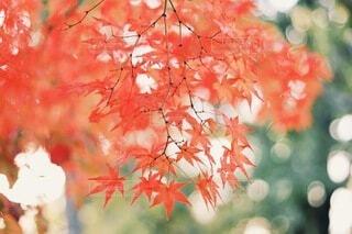 紅葉の写真・画像素材[3839759]