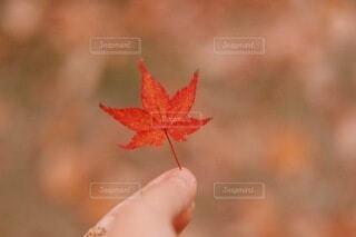 紅葉の写真・画像素材[3839763]
