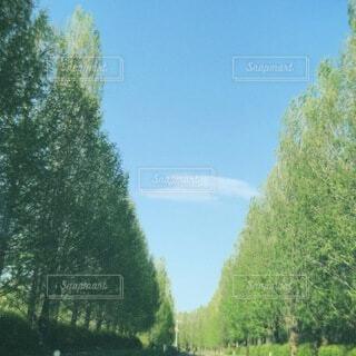 空と新緑の写真・画像素材[4416495]