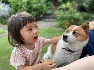 犬と女の子の写真・画像素材[2701483]