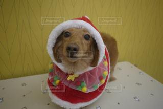 帽子をかぶった犬の写真・画像素材[2833482]